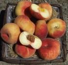Gli antichi sapori dei frutti dimenticati