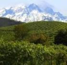 Grignolino: vitigno e vino tra i più anarchici