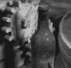 Camminare la terra. Degustazione Amarcord'Amarone rinviata al 2 settembre